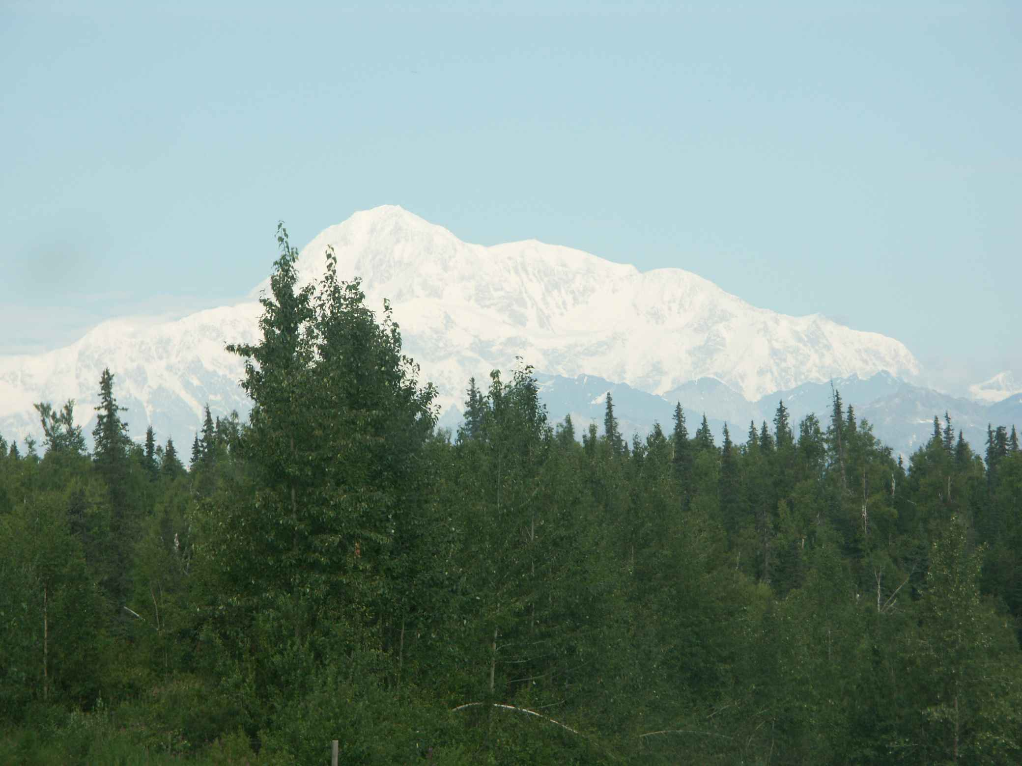 view of denali with forest in foreground